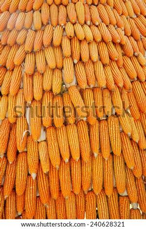 Grains of ripe corn. - stock photo