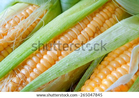 Grains of ripe corn - stock photo