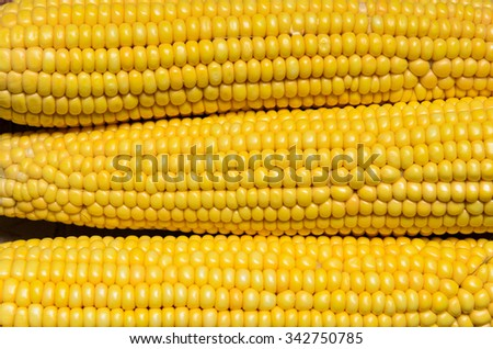 Grains of ripe corn, close up