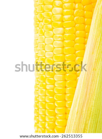 Grains of ripe Corn.  Isolated on white background with clipping path  - stock photo