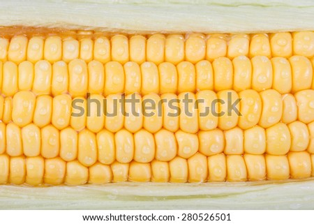 grains of ripe corn with water drop  - stock photo