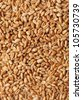 Grains of wheat close-up - stock photo