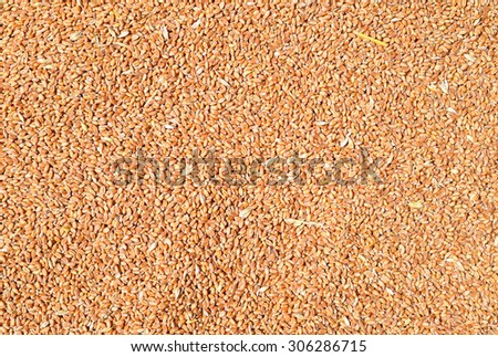 Grains of wheat in the background photo - stock photo