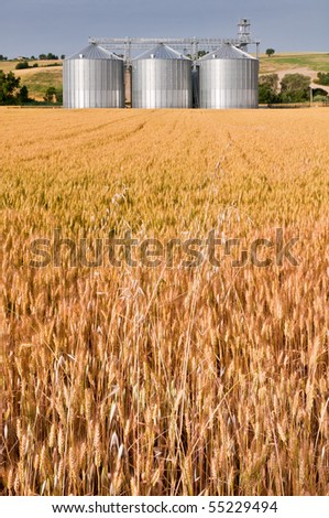 Granary in golden wheat field - stock photo