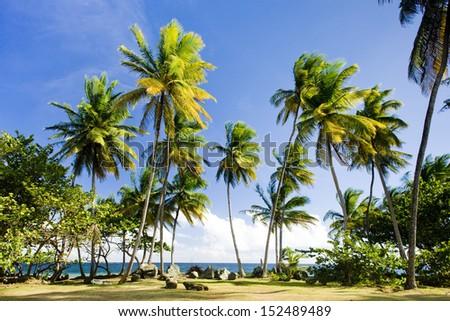 Granby Point, Tobago - stock photo