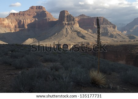 Grand Canyon National Park, AZ/Grand Canyon/ Along the Tonto Platform of the Grand Canyon are many side canyons to explore and experience. - stock photo