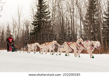 GRAND MARAIS MN - JANUARY 26: Marla Brodsky's team races on the trail during the Mid-distance portion of the John Beargrease Sled Dog Race. Brodsky finished 22nd on January 26 2015 in Grand Marais MN - stock photo