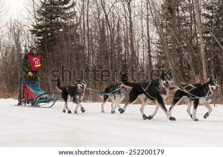 GRAND MARAIS MN - JANUARY 26: Melvin Mickelson's team on the trail during the Mid-distance portion of the John Beargrease Sled Dog Race. Mickelson finished 17th on January 26 2015 in Grand Marais MN - stock photo