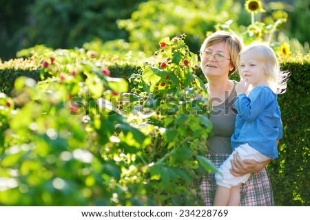 Grandmother and her baby girl picking raspberries in a garden - stock photo