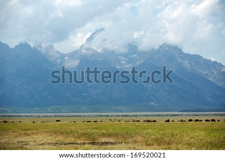 Grant Tetons at Grand Teton National Park with Herd of Buffalo on the Meadows - stock photo