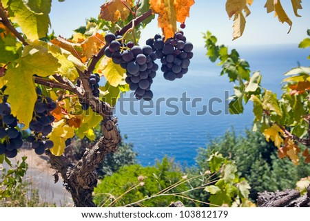 grape and sea - stock photo