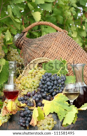 grape and wine autumn scene