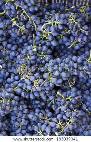 Grape berries - stock photo