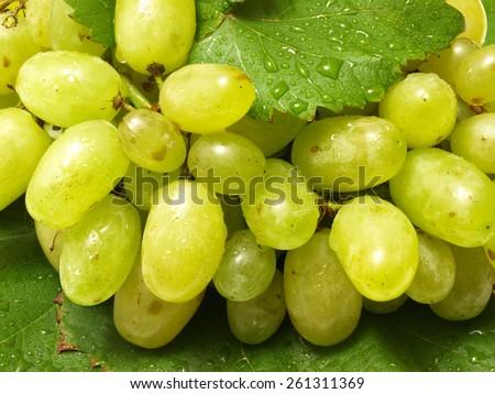 Grape fruit - stock photo