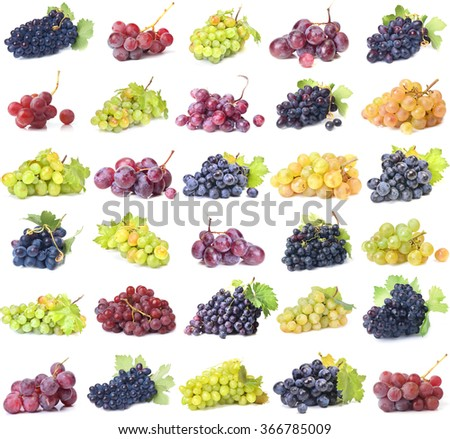 Grape fruit collection - stock photo