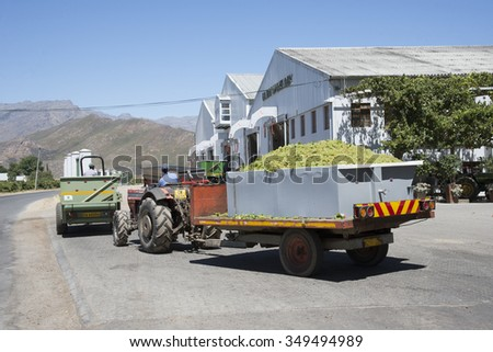 GRAPE HARVEST TIME IN SOUTH AFRICA - CIRCA 2014 - Sauvignon blanc grapes arriving at Goudini Cellar in Rawsonville Western Cape South Africa