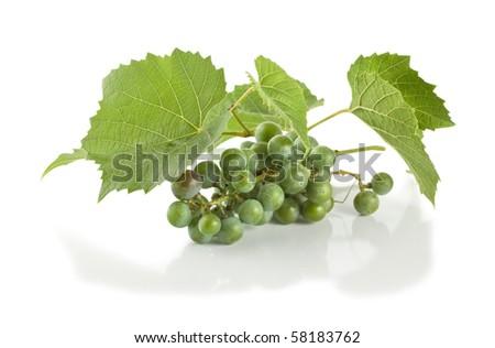 Grape isolated on white background - stock photo