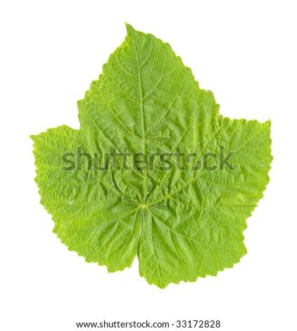 Grape Leaf isolated - stock photo