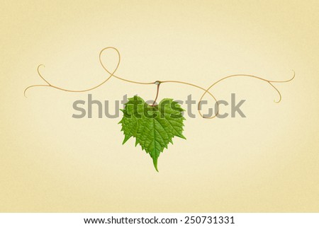 grape leaf on a branch. picture in retro style - stock photo