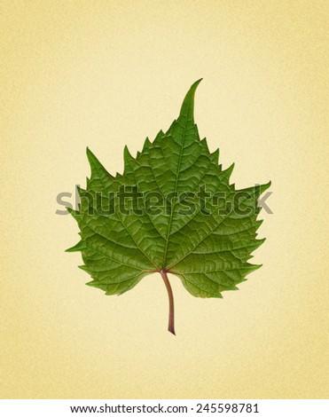 grape leaf. picture in retro style - stock photo
