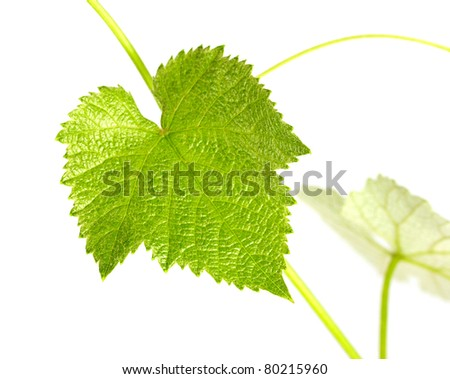 Grape leaves isolated on white - stock photo