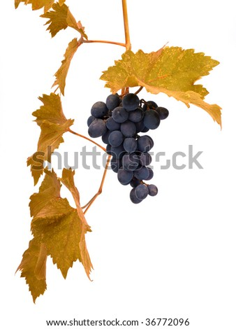 Grape on the white isolated on white - stock photo