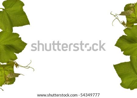 Grape vine borders isolated on white - stock photo