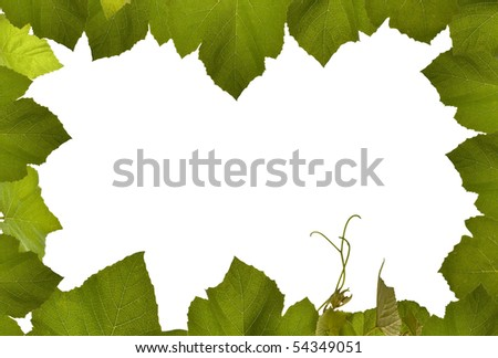 grape vine frame isolated with white, copy space in middle - stock photo