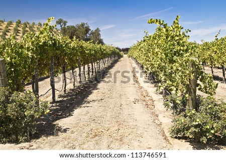 Grape vines climb the rolling hills in a California wine country vineyard - stock photo