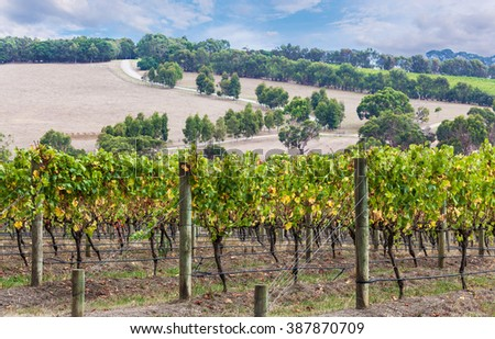 Grape vines closup with beautiful countryside in the background - stock photo