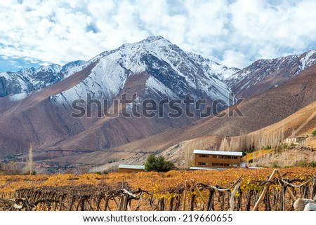 Grape vines used for pisco with the Andes Mountain Range in the background near Vicuna, Chile - stock photo