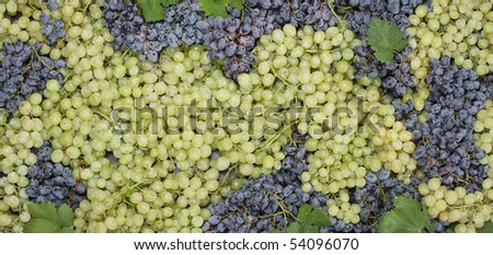 Grape with leafs - stock photo