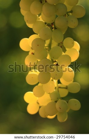 grapes - stock photo