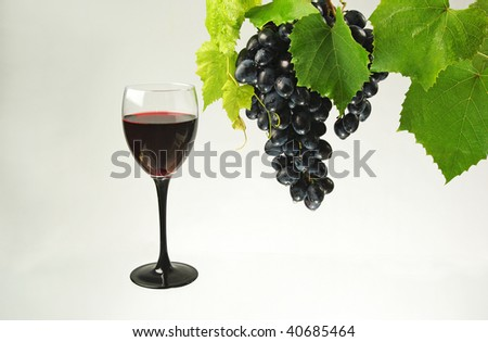 Grapes and wine. Red  wine in glass, black grape and green leaves