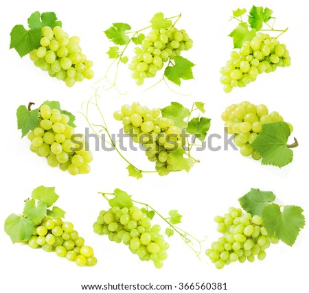 Grapes branch set isolated on white background. Green nine grapes set - stock photo