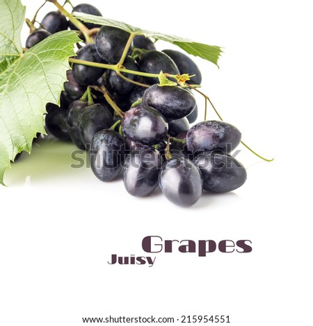 Grapes cluster with grapevine isolated on white background. Blue ripe grape with copy space - stock photo