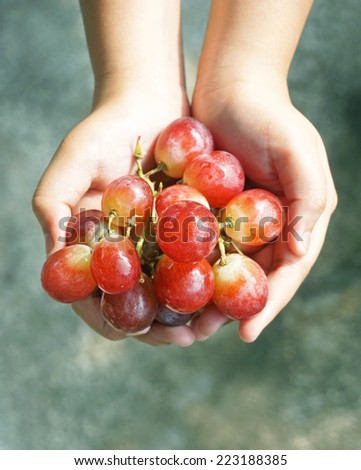 Grapes harvest, hands with freshly grapes - stock photo