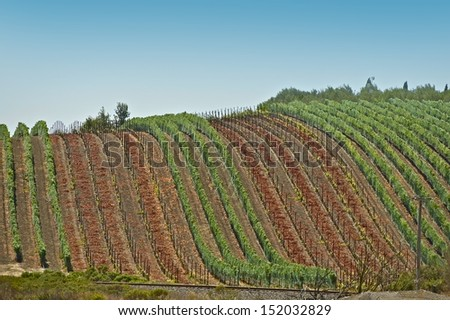 Grapes Harvesting - Vineyards in California, USA. Agriculture Photo Collection.