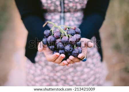 grapes in hands - stock photo