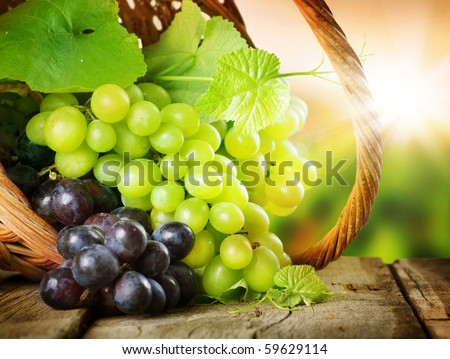 Grapes in the basket.Grapevine over vineyard background - stock photo