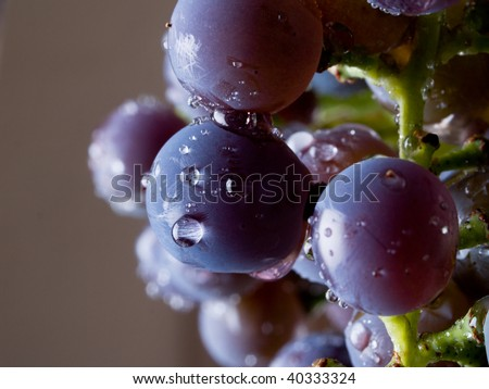 Grapes Macro - stock photo