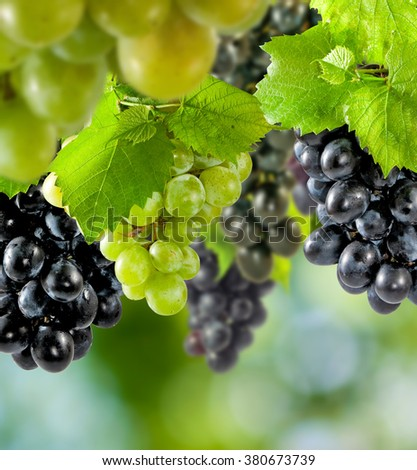 grapes on a green background close-up