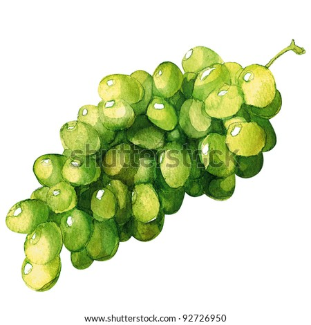 grapes, watercolor painting on white background - stock photo
