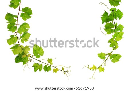 Grapevine arch border on white background - stock photo