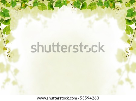 Grapevine background design - stock photo