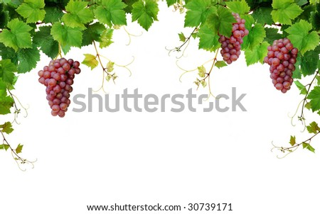 Grapevine border, isolated on white background - stock photo