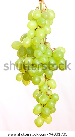 Grapevine Isolated white background - stock photo
