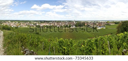 grapevine on a landscape in burgundy, small region in france - stock photo