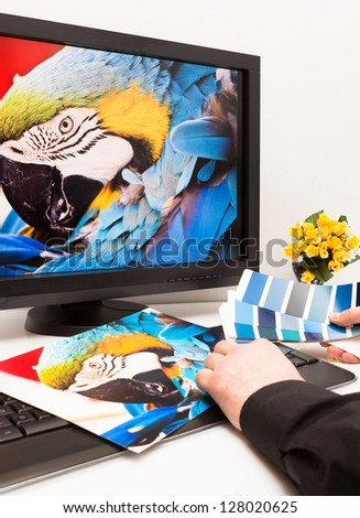 Graphic designer at work. Color samples. Blue parrot macaw bird photo - stock photo