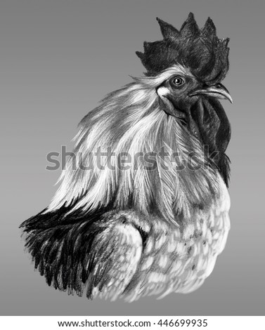 Graphic drawing. Head of rooster in profile on a gray background. - stock photo